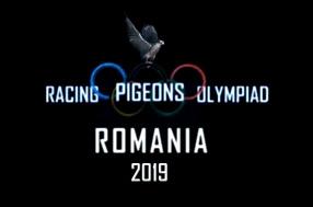 olimpiada-porumbei-voiajori-romania2019