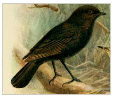 negrul-robin