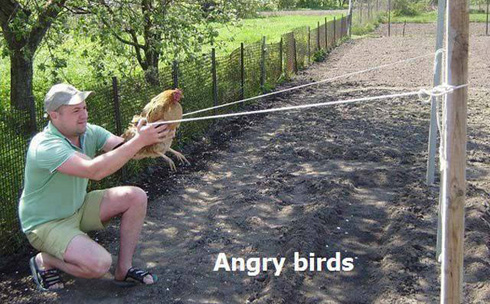 angrybirds-gaina