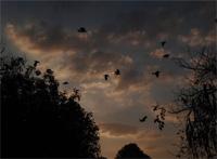 porumbei-noaptea