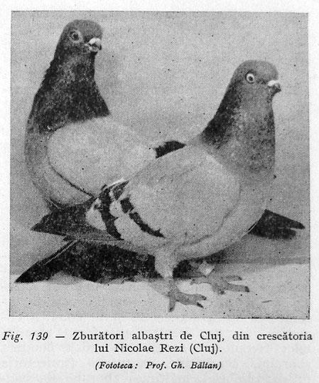 albastri-de-cluj1
