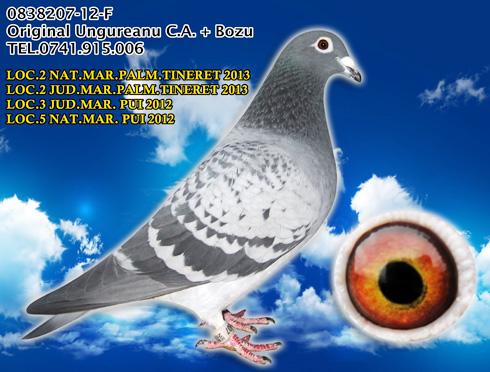 0838207-12-F-loc2-NAT