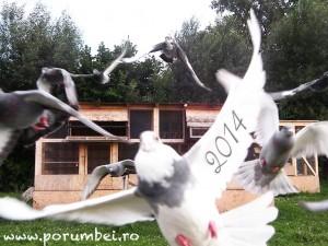 2014-porumbeiro