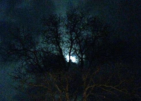 zbor-noaptea-porumbeiro
