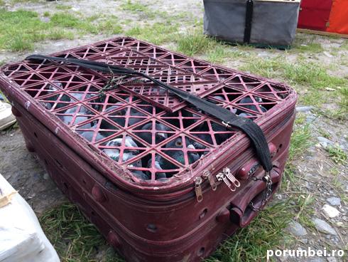 valiza-porumbei