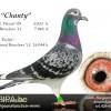 chanty-bvbuuren-nieuw
