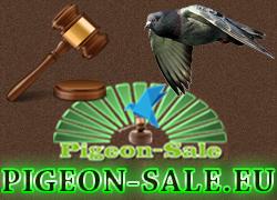 pigeonsaleeu