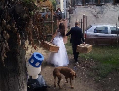 imbarcare-nunta3