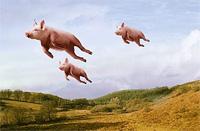 zborul-porcului