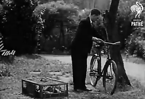 sportul-columbofil-1930
