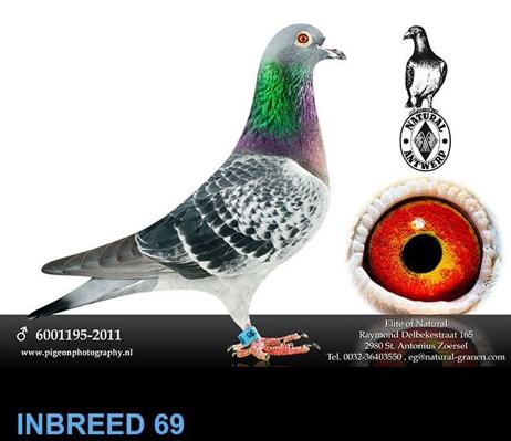 inbreed-69