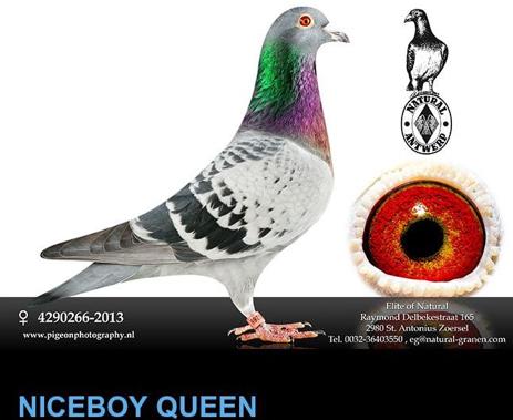 niceboy-queen