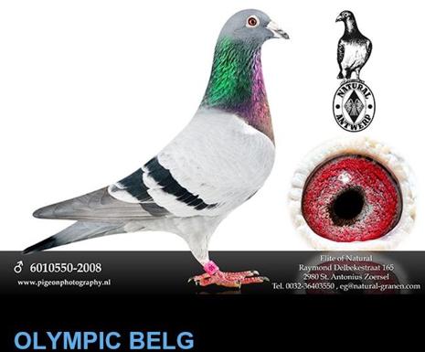 olympic-belg