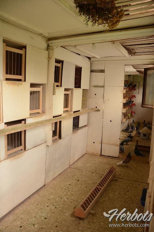 herbots-plants-loft
