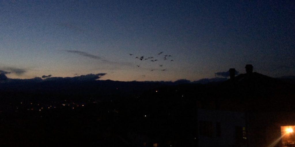 pasari zbor de noapte