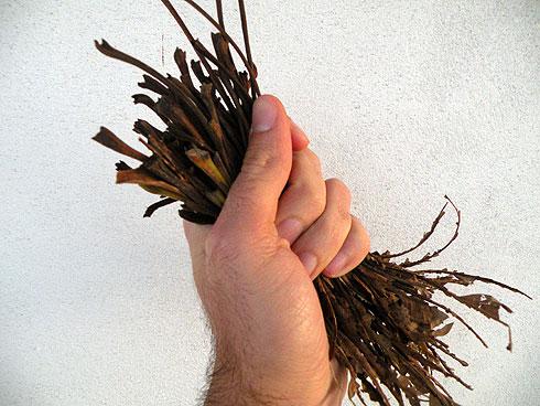 cotoare de frunze de nuc pentru cuibul porumbeilor